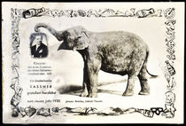Kassner and his Disappearing Elephant Postcard